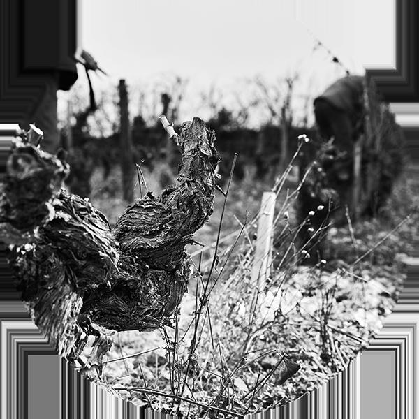 Photographe de vins en Sarthe