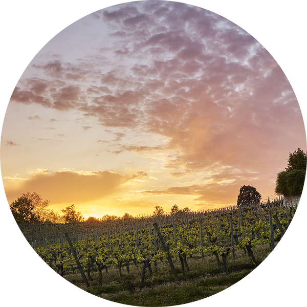 Photographe de vins à Chinon